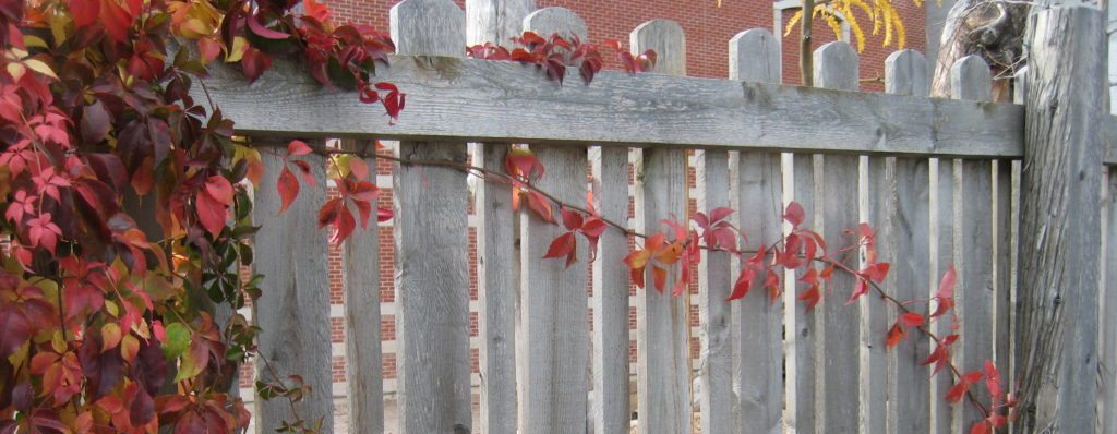 vines on fence